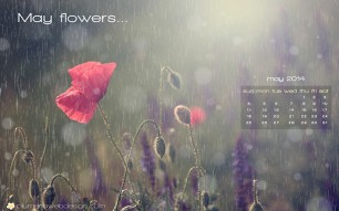 May 2014 Wallpaper